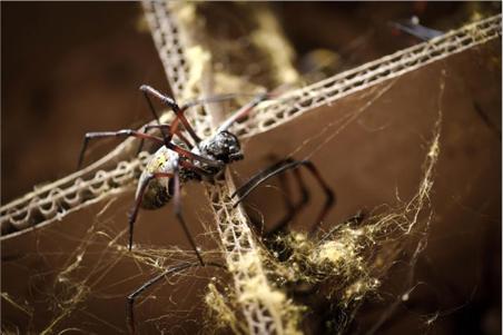 varvaressos_spider